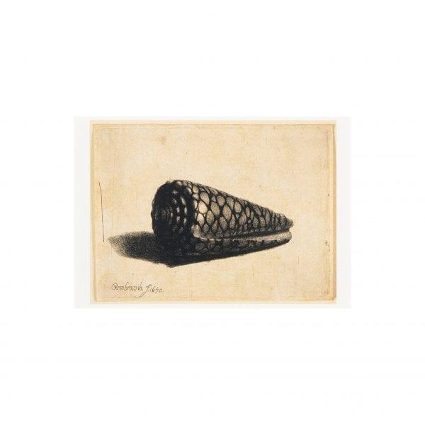 Postcard A Shell