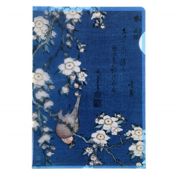 Clear file folder Bullfinch on branch of cherry blossoms